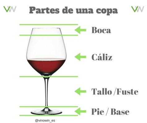 Partes copa vino